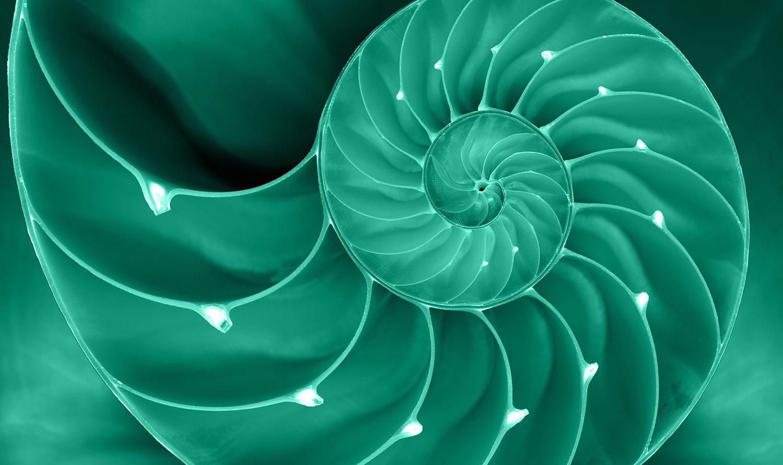 Nautilus-4